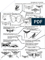 A Field Guide of Insect Borror White
