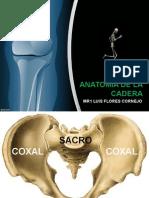 Anatomia Cadera