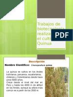 Andrés Aroca - Quinua