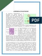 ESpermatogenesis