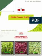 Budidaya Bayam