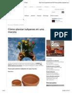 Cómo Plantar Tulipanes en Una Maceta - Hogar Total