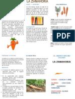 Criptico La Zanahoria