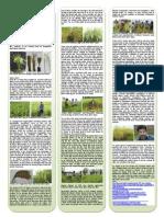 A Story of Bangladeshi Indica Rice by Dr Shahin