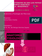 anatomayfisiologadelpncreas-130307050412-phpapp02
