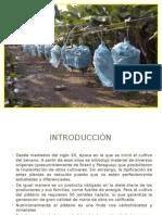 DIAPOSITIVAS DE FRIO EXPOSICION.pptx