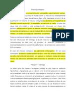 Propedeutica (ITS)