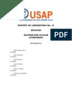 RBB11 Respiracion Celular (Levaduras)