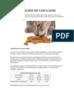 Alimentación de Los Gatos