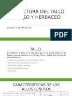 Estructura Del Tallo Leñoso y Herbaseo