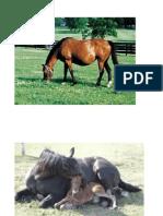 Horses Pics
