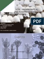 Regnul Fungi- Micotoxine