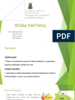 Impactos Pantanal