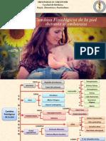 Mapa Conceptual, cambios en la piel y tejido subcutáneo.Obstetricia (1).pdf