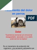Control del Dolor en Perros