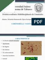 24.-Gardenerella Vaginalis