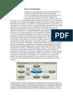 Regulación Del Fósforo en El Organismo