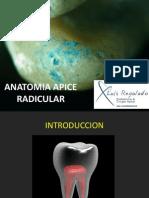 2daclaseanatomiaapiceradicular-110222173205-phpapp02