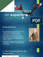 Ruta Biosintética Del Aspartato