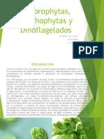 Atlas Chlorophytas, Xanthophytas y Dinoflagelados