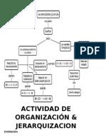 Actividad de Organización y Jerarquización