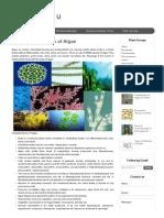 Main Characteristics of Algae _ Plant Science 4 U