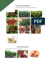 Cultivos en Huehuetenango