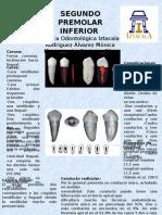 Segundo Premolar Inferior (1)