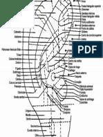Orelha - Pontos de Auriculoterapia