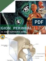 7 Region Perineal 2015