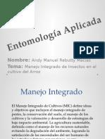 Entomologia Rebutti