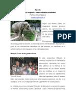 La Muerte de Una Elefanta Conmociona a El Salvador