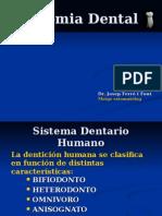 ANATOMIA DENTAL1.pps
