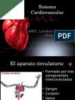 Sistema Cardiovascular Negro
