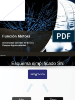 Musculo Neurociencias