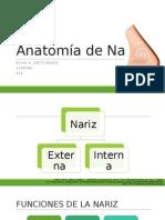 Anatomía de Nariz