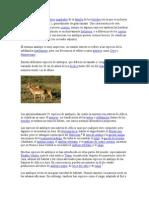 Antilopes y Habitat