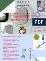 genetica transgenicos