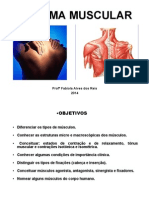 Sistema Muscular 2014