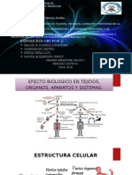 Radiacion Radioterapia Infrarrojos y Ultravioleta