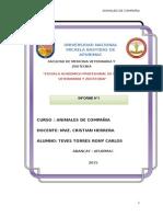 Informe Compañia