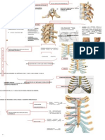Mapa Artrologia Torax