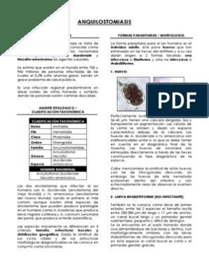 anquilostomiasis agente etiologico