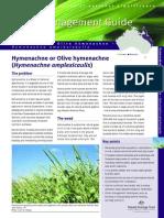 olive hymenachne