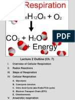 02 - Cell Respiration.ppt