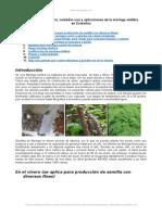 Moringa Oleifera Manual Siembra Cuidados Usos y Aplicaciones