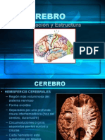 Cerebro y Áreas de Brodmann-Areas-De-brodman