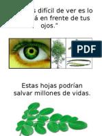 272529640-Moringa.ppt
