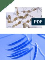 Micología, virología