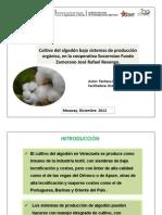 Cultivo del algodón bajo sistemas de producción orgánica, en la cooperativa Socorroian Fundo Zamorano José Rafael Revenga.